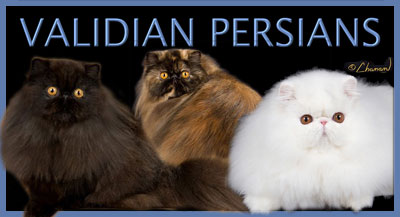 Validian Persians